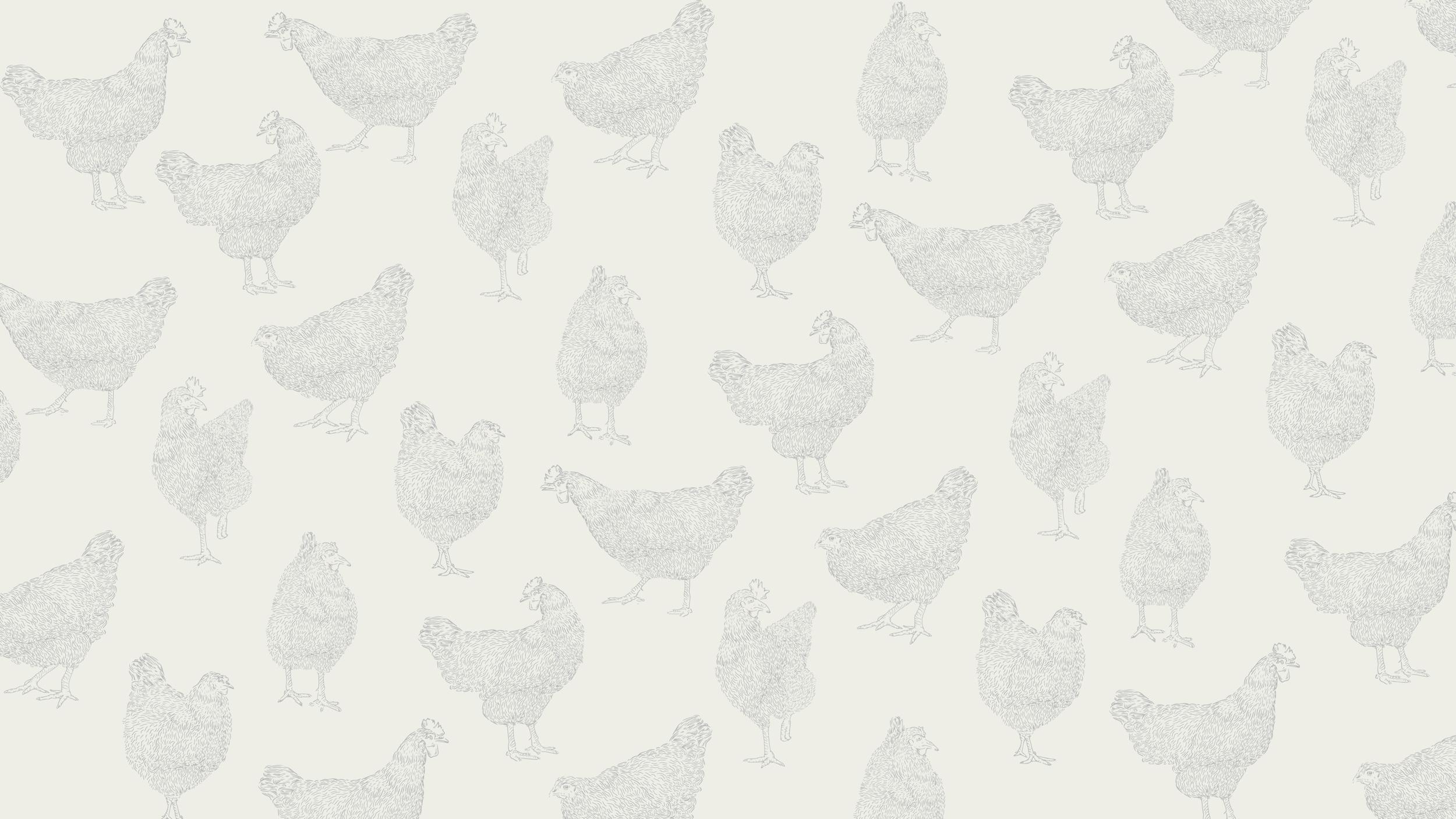 kamikaze-identidad-corporativa-huevos-ecologicos-cardenillo-13